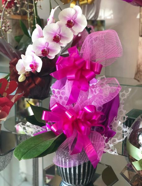 Orquídea Phalaenopsis Mesclada
